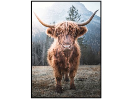 Plakát Highland cattle v lese
