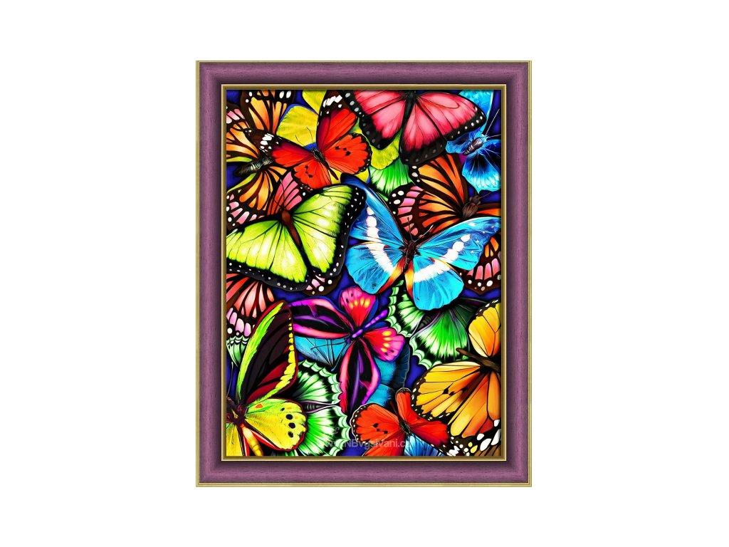 AZDP1725 Motylci