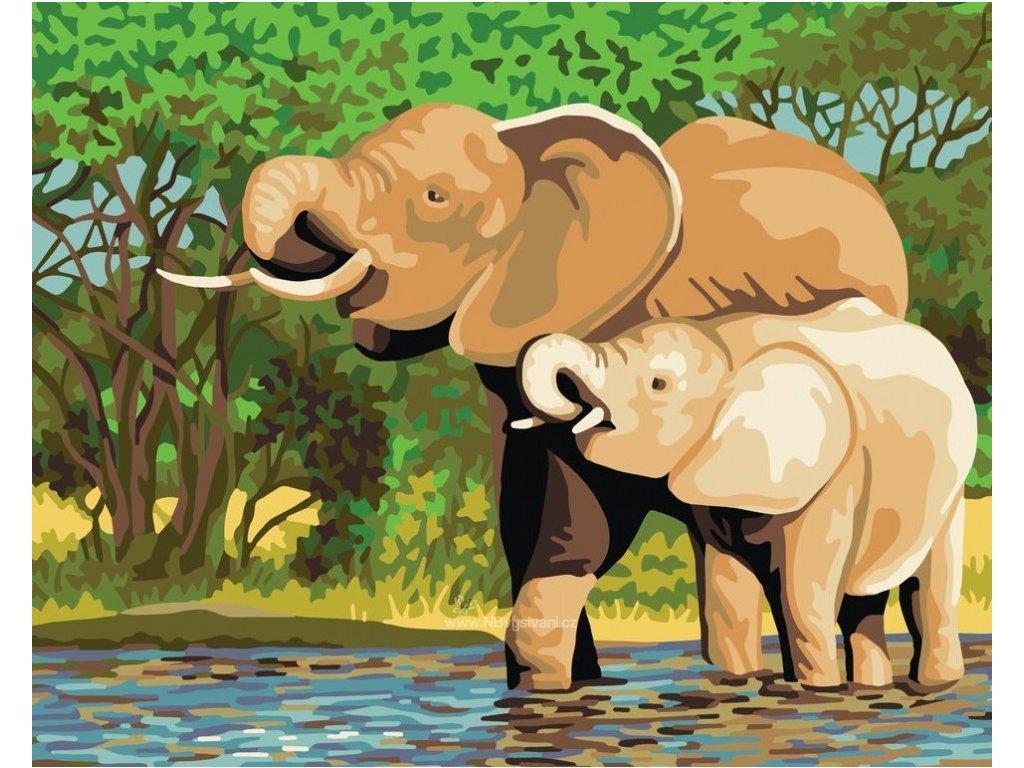 ADA11.878 Sloni u napajedla