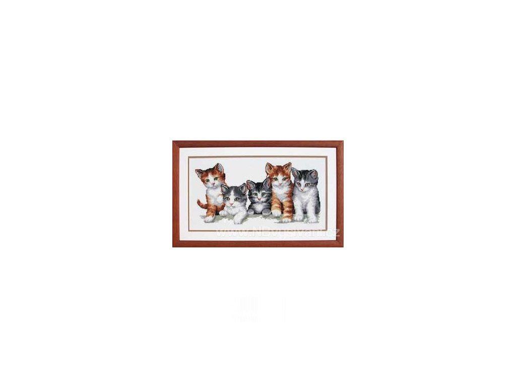 VE2002-70.893 Koťata