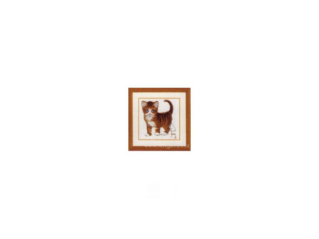VE2002-70.084 Malé kotě