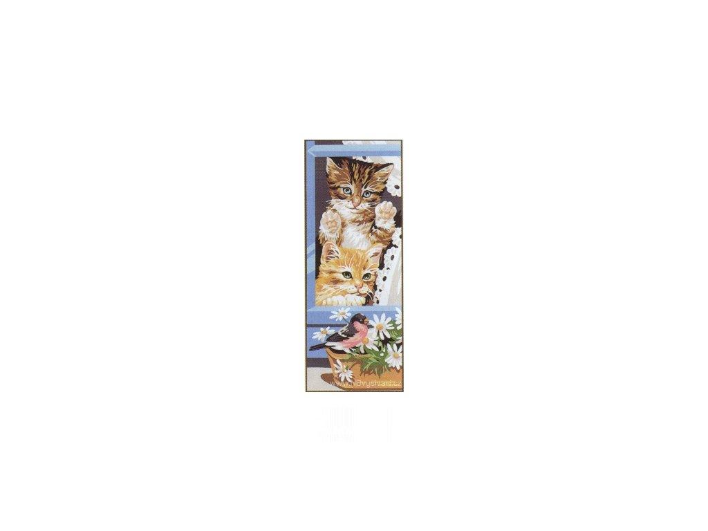 ARP988.0137.30 Zvědavá koťata