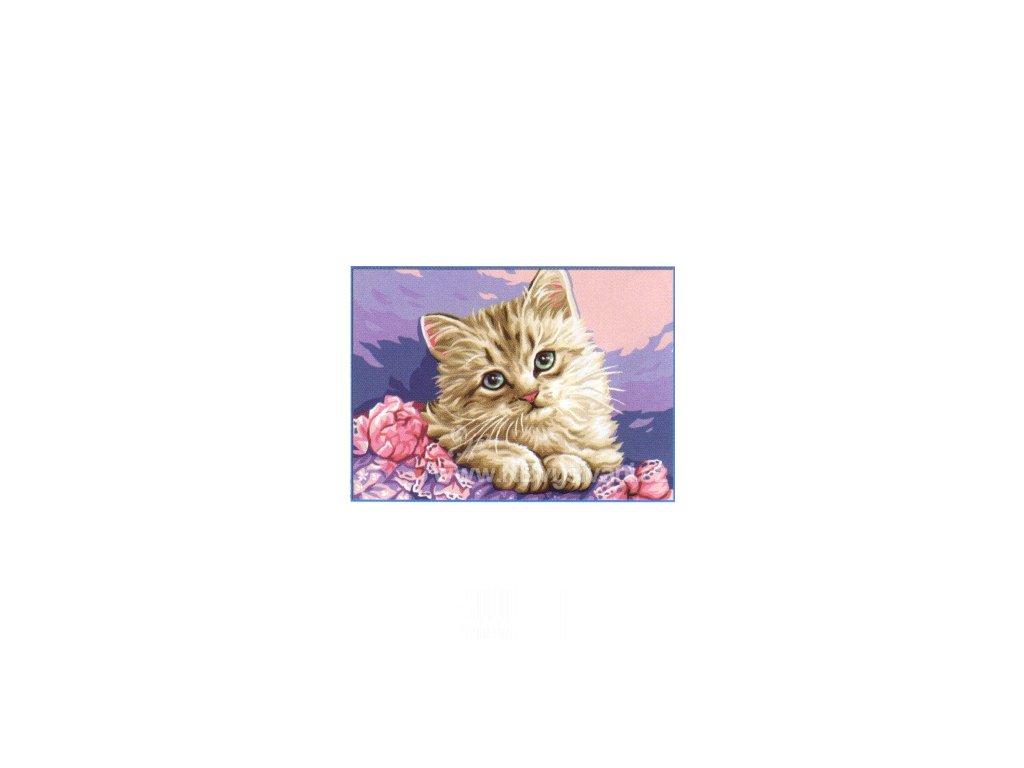 ARP988.0131.101 Kočička
