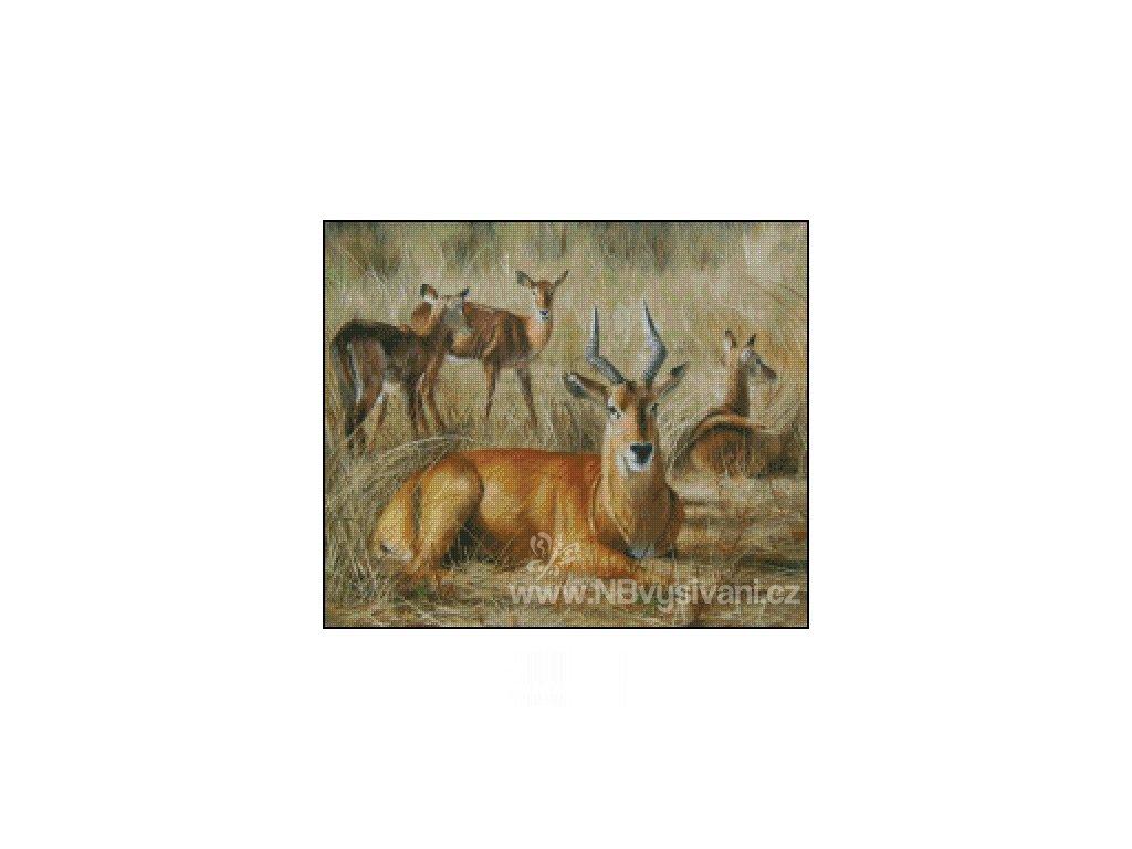 Puku Antelope (Aida 18ct)