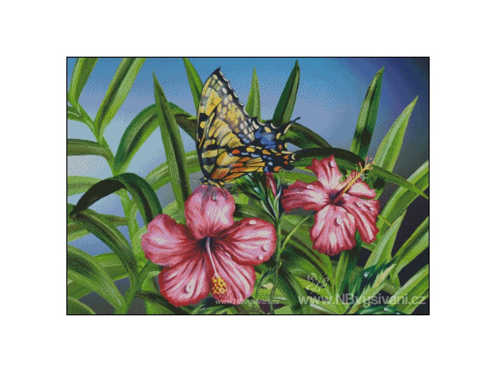 Monarch on Hibiscus (předloha)