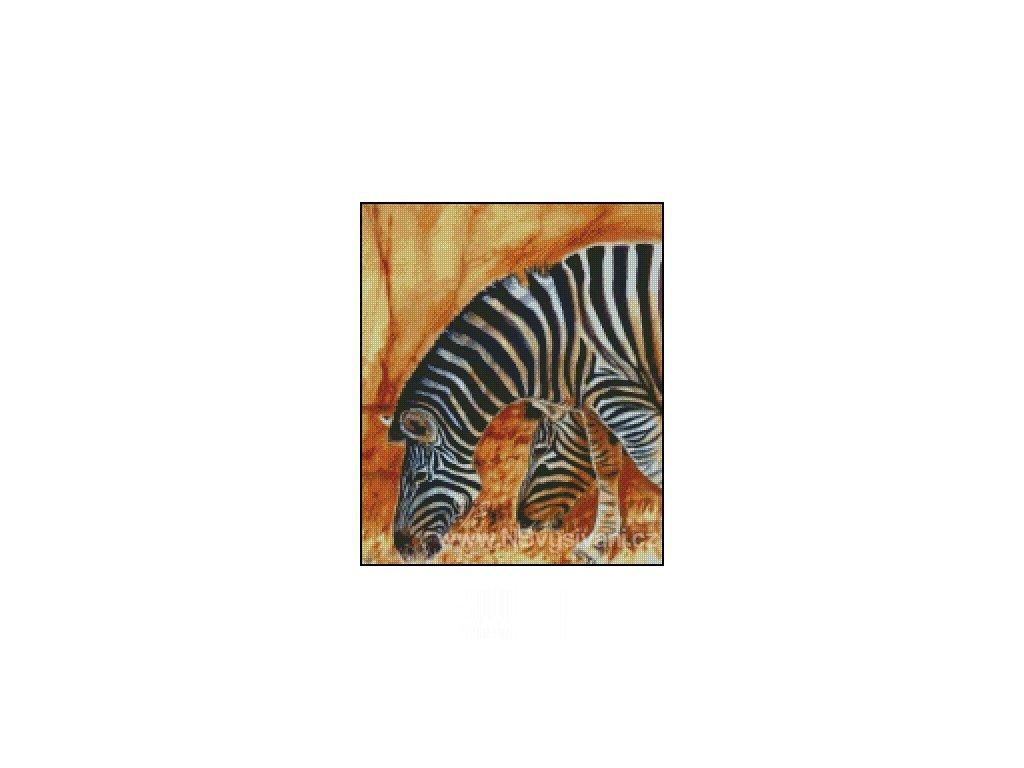 Zebras (předloha)