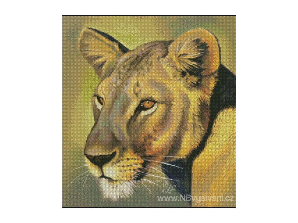 Lioness (předloha)