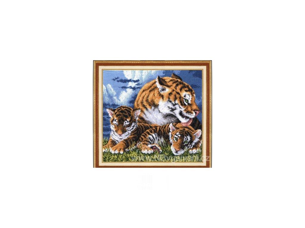 ZR-DZH014 Tygříci