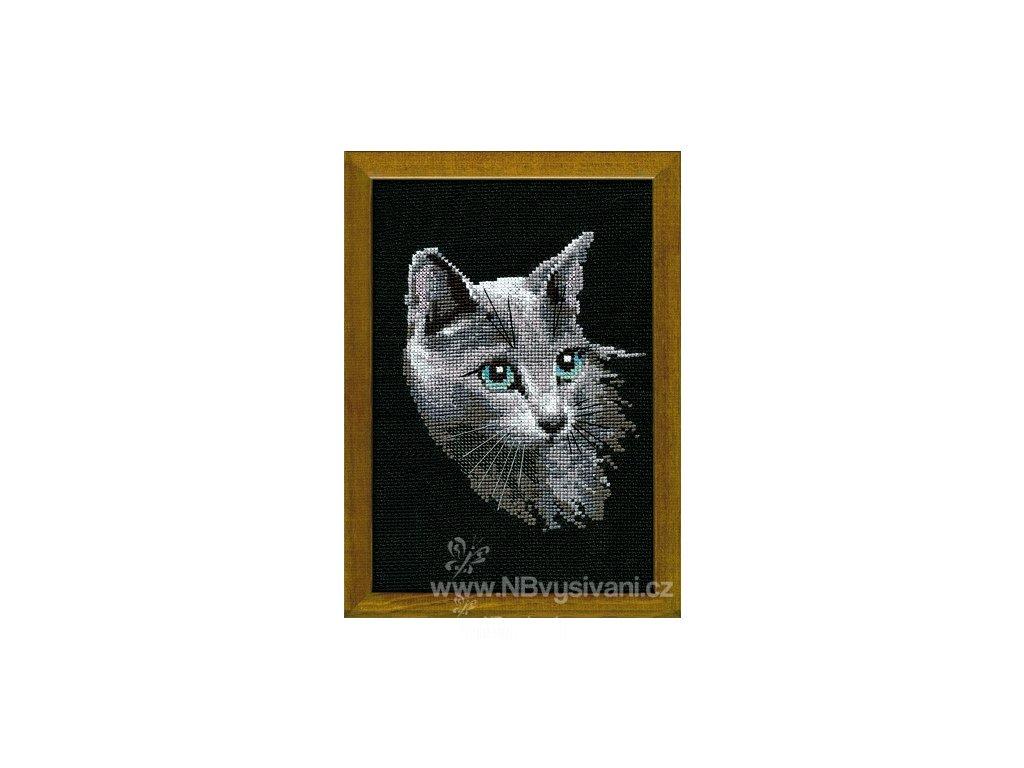 RIO-764 Siamská kočka