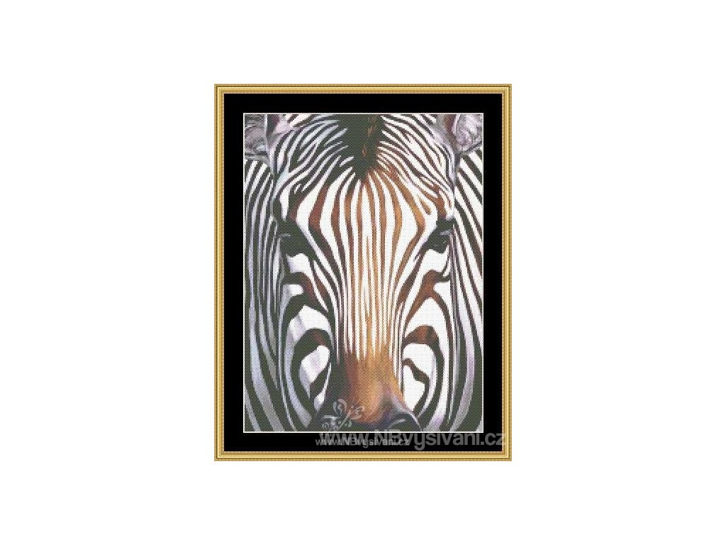 MS-CLB11 Zebra (předloha)