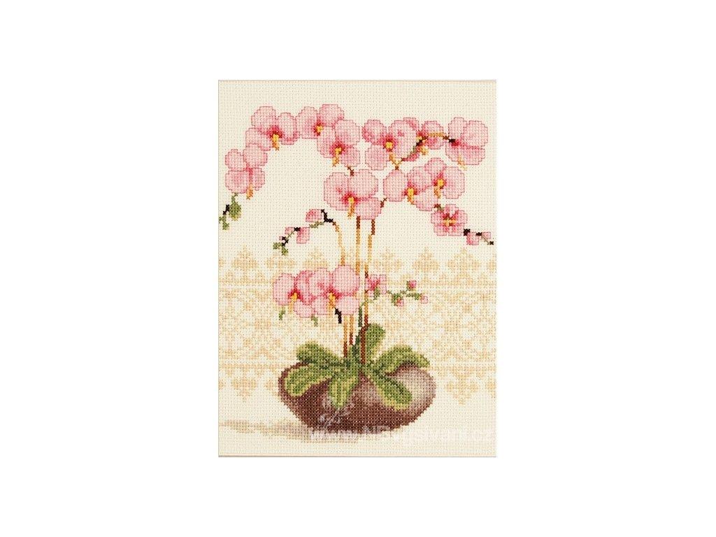 VE2002-75.351 Orchidea