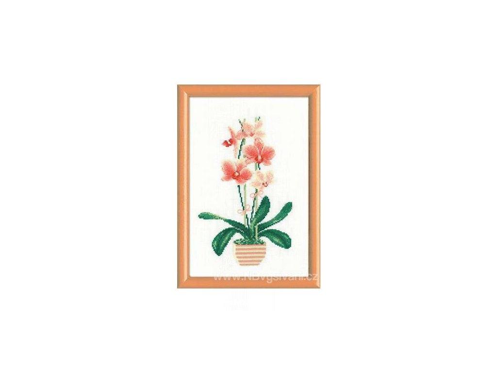 RIO-1161 Orchidea I.