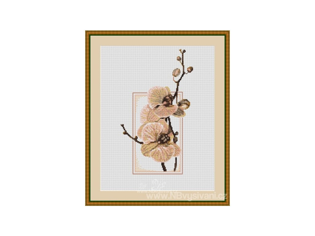LUC-B288 Orchidea