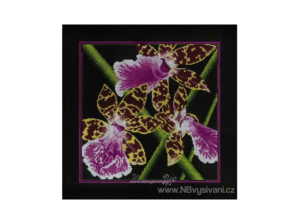 RT-M265 Orchidea (Zigopetalum)