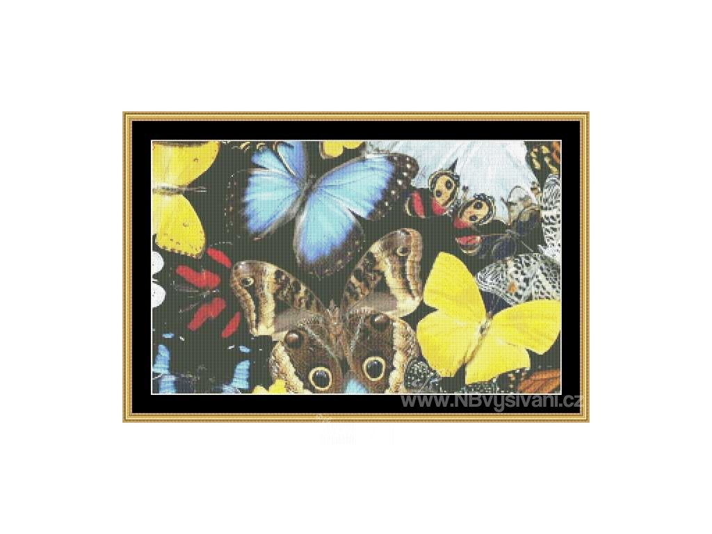 MS-BUTC60 Butterfly Passion (Aida 18ct)