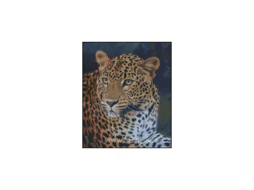 Leopard Stare (Aida 18ct)