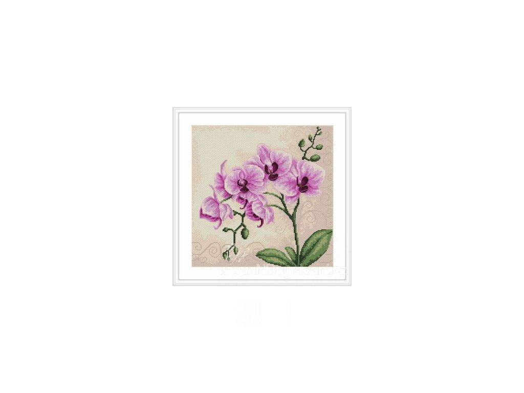 LUC-B2227 Orchidea