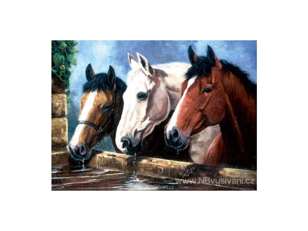 PJL23 Trio koní