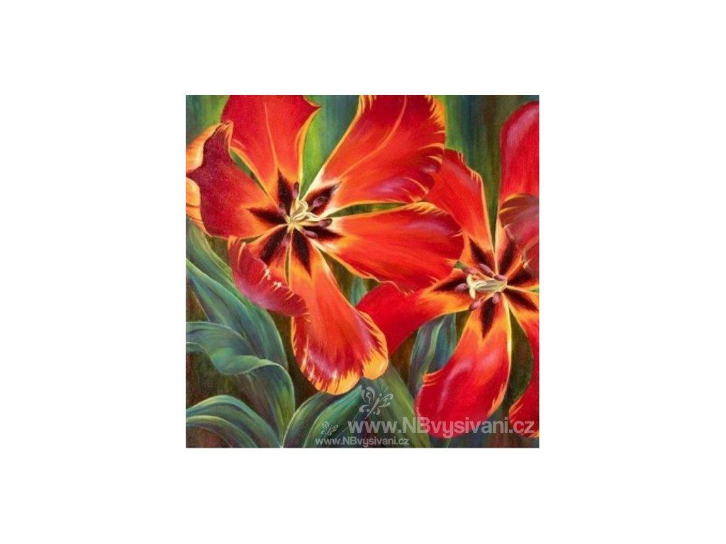 AZDP-1128 Tulipány