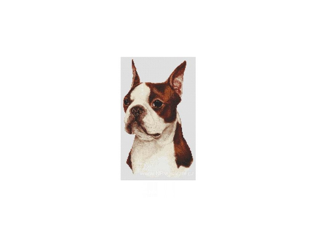 IC8449-(034-034) Red & White Boston Terrier (předloha)