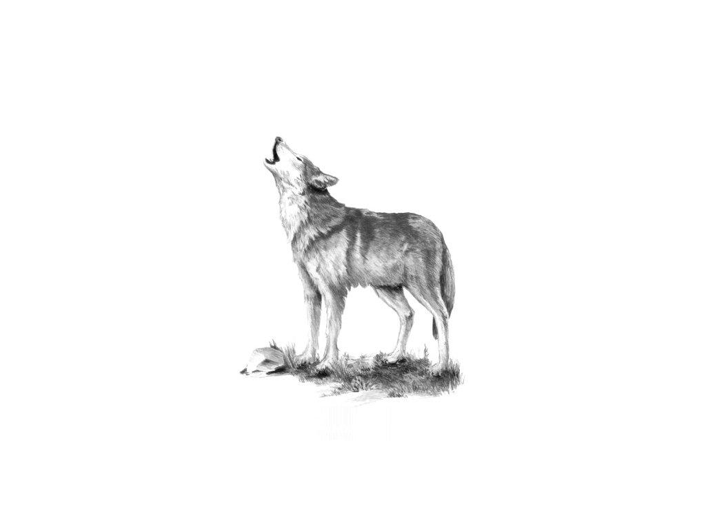 SKMIN110 Skicovací sada - Vlk