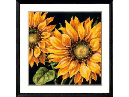 71-20083 Dramatic Sunflower - Slunečnice