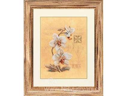 L-PN0008008(34746) Orchideje