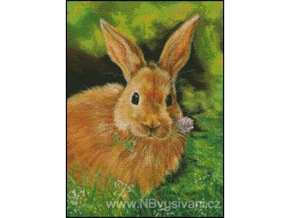 Clover Honey Bunny (Aida 18ct)