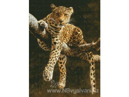 H-05-2093 Hypnotic Leopard (předloha)