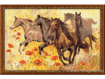 RIO-1064 Stádo koní