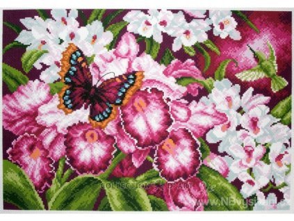 CDA-1138 Orchideje