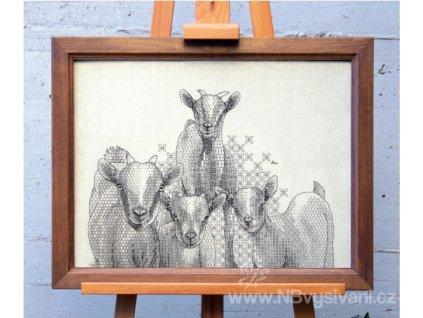 AJ-Curious Goats