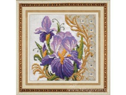ZLR-M004 Sametově modré irisy