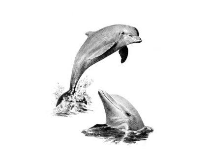 SKBN19 Skicovací sada - Delfíni