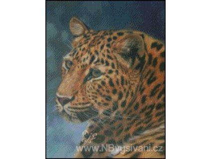 Amur Leopard (předloha)