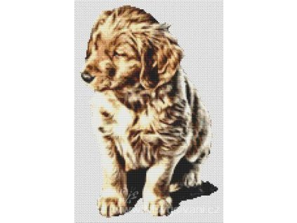 IC21049-(000-374) Golden Retriever Puppy (předloha)