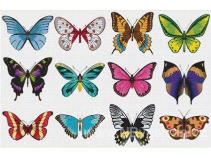 IC11745 Set of Butterflies (předloha)