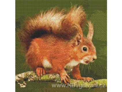 IC-18870 Bushy-Tailed Squirrel (předloha)