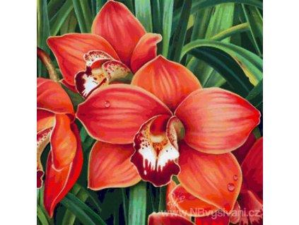 AZDP-1026 Orchidea