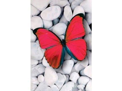 WD-054 Růžový motýl