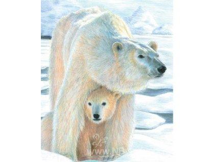 CPN22 Kreslení - Lední medvědi