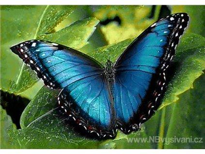 WD-055 Modrý motýl