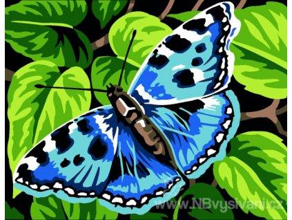 MAR-766.6024111 Motýlek