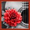 AZDP-1772 Kytara a červený květ