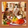 AZDP-1730 Mlsné kočky