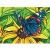 ADA6.330 Motýl