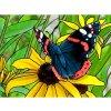 CDA-DE7069 Motýl
