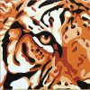 S-46.385 Tygrův pohled
