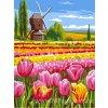 ARP988.0107.157 Země tulipánů