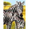 ARP988.0107.166 Zebry